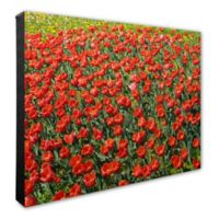 Dense Red Tulip Field 20-Inch x 24-Inch Canvas Wall Art