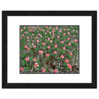 Frosted Pink Tulip Field 18-Inch x 22-Inch Framed Wall Art