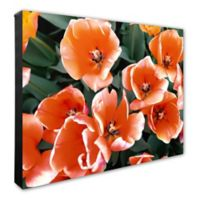 Large Orange Tulips 16-Inch x 20-Inch Canvas Wall Art
