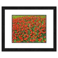 Dense Red Tulip Field 22-Inch x 26-Inch Framed Wall Art