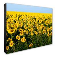 Sunflowers 16-Inch x 20-Inch Photo Canvas Wall Art