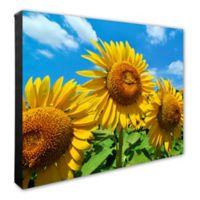 Sunflower Field 16-Inch x 20-Inch Photo Canvas Wall Art