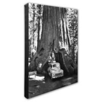 Sequoia Tree 20-Inch x 24-Inch Canvas Wall Art