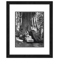 Sequoia Tree 18-Inch x 22-Inch Framed Wall Art