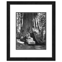 Sequoia Tree 22-Inch x 26-Inch Framed Wall Art