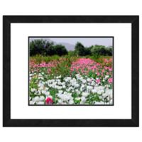 White and Pink Poppies Flowers 18-Inch x 22-Inch Framed Wall Art