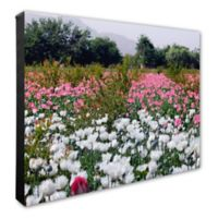 White and Pink Poppies Flowers 16-Inch x 20-Inch Photo Canvas Wall Art