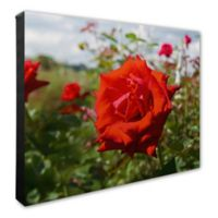 Red Rose 20-Inch x 24-Inch Canvas Wall Art