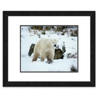 Polar Bear 22-Inch x 26-Inch Framed Wall Art