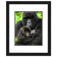 Gorillas 22-Inch x 26-Inch Framed Canvas Wall Art