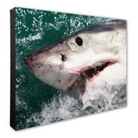 Great White Shark 20-Inch x 24-Inch Framed Canvas Wall Art