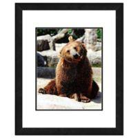 Grizzly Bear 18-Inch x 22-Inch Framed Canvas Wall Art