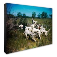 Hunting Dogs 16-Inch x 20-Inch Framed Matted Photo Wall Art