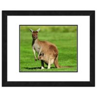 Photo File Kangaroo 22-Inch x 26-Inch Framed Photo Wall Art