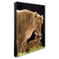 Lion 16-Inch x 20-Inch Photo Canvas Wall Art