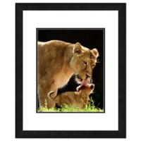 Lion 11-Inch x 14-Inch Framed Photo Canvas Wall Art