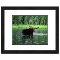 Photo File Moose in Water 18-Inch x 22-Inch Framed Photo Wall Art