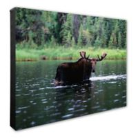 Photo File Moose in Water 16-Inch x 20-Inch Photo Canvas Wall Art