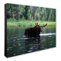 Photo File Moose in Water 20-Inch x 24-Inch Photo Canvas Wall Art
