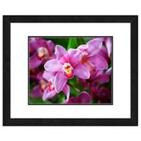 Photo File Pink Orchid Flowers Framed Photo Wall Art
