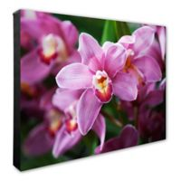 Photo File Pink Orchid Flowers Canvas Wall Art