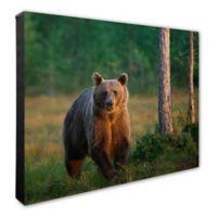 Running Bear 16-Inch x 20-Inch Canvas Wall Art