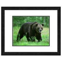 Bear Near Woods 22-Inch x 26-Inch Framed Wall Art