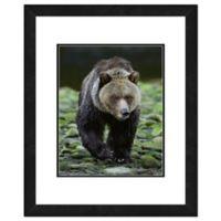 Bear on Rocks 18-Inch x 22-Inch Framed Wall Art