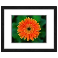 Orange Daisy 18-Inch x 22-Inch Framed Wall Art