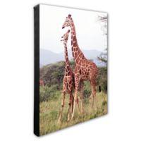 Giraffes 16-Inch x 20-Inch Photo Canvas Wall Art