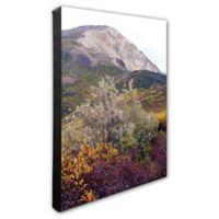 Denali National Park 20-Inch x 24-Inch Photo Canvas Wall Art
