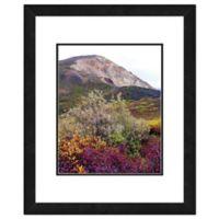 Denali National Park 22-Inch x 26-Inch Framed Wall Art