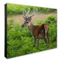 Photo File, Inc. Deer 20-Inch x 24-Inch Photo Canvas Wall Art