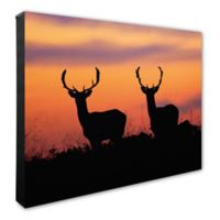 Photo File, Inc. Deer at Sunset 20-Inch x 24-Inch Photo Canvas Wall Art