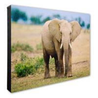 Lone Elephant 16-Inch x 20-Inch Photo Canvas Wall Art