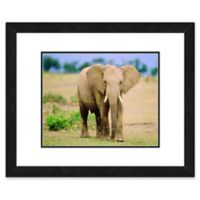 Lone Elephant 22-Inch x 26-Inch Framed Wall Art