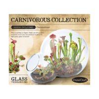 DuneCraft Carnivorous Collection Double Bubble Glass Terrarium