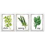 Watercolor Herbs II 3-Pack Printed Canvas Wall Art