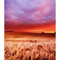 Elementem Photography At the Sunset 20-Inch x 24-Inch Canvas Wall Art
