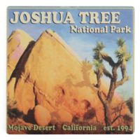 Thirstystone® Dolomite Joshua Tree National Park Square Single Coaster