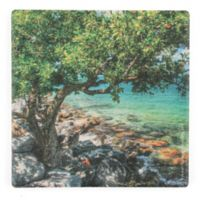 Thirstystone® Dolomite Rocky Shore Tree Square Single Coaster