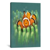 iCanvas Clown Fish 12-Inch x 18-Inch Canvas Wall Art