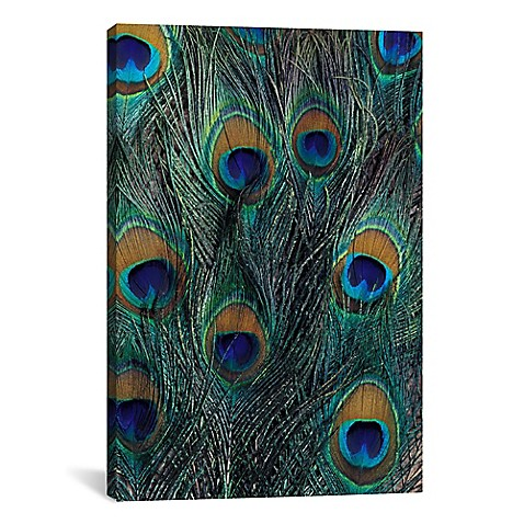 Icanvas peacock feathers in zoom canvas wall art buybuy baby for Where can i buy peacock feathers craft store