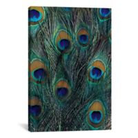 iCanvas Peacock Feathers in Zoom 12-Inch x 18-Inch Canvas Wall Art