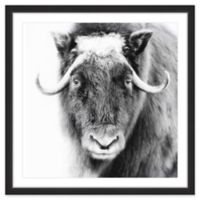"Marmont Hill ""Look at Me"" 24-Inch Square Framed Wall Art"