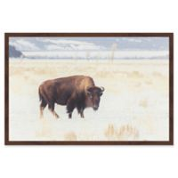 Marmont Hill Curious Beast 24-Inch x 16-Inch Framed Wall Art