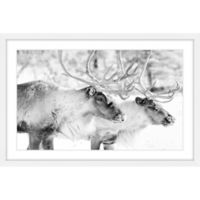 Marmont Hill Elk Pair 60-Inch x 40-Inch Wall Art