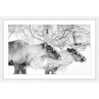 Marmont Hill Elk Pair 24-Inch x 16-Inch Wall Art