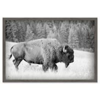 Marmont Hill Buffalo Grazing 18-Inch x 12-Inch Framed Canvas Wall Art