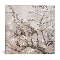 """iCanvas """"Almond Branches San Remy"""" Extra-Deep 18-Inch x 18-Inch Canvas Wall Art"""